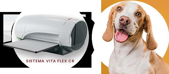 Radiologia digital para veterinário